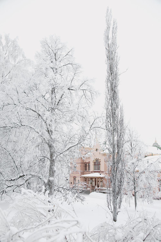 Talvinen näkymä Historiallisen museon puistoon. Lumisia puita. Taustalla roosan sävyinen museorakennus.